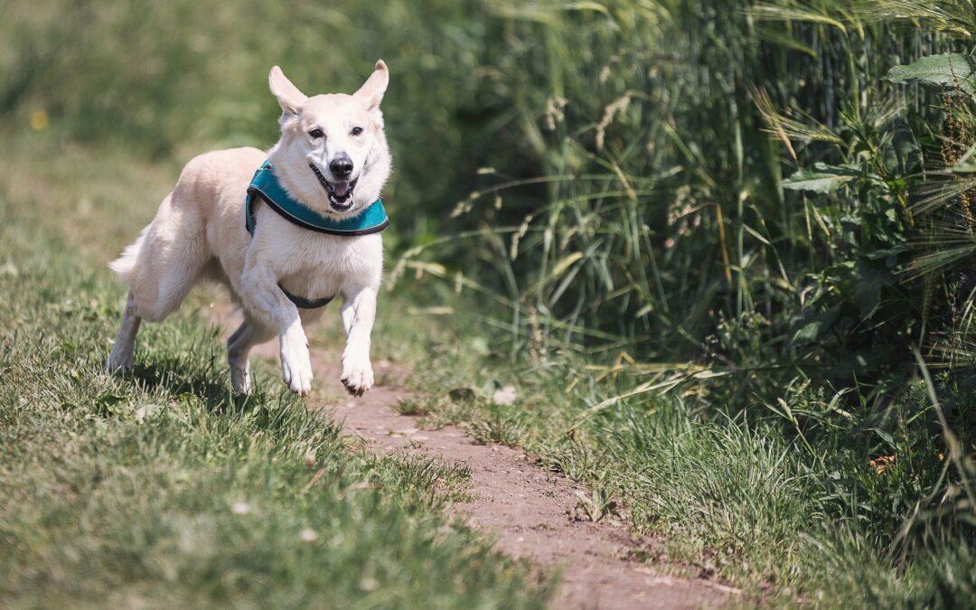 Vær aktiv med din hund