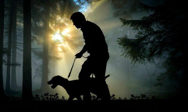 Sådan gør du noget godt for dig og din hund