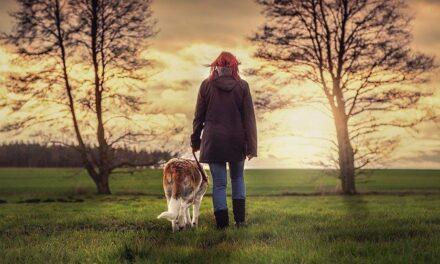 Din hund gør dig sund